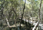 Mangrove Boardwalk, Manly, South-east Queensland