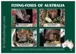 Flying-foxes of Australia